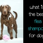What is the best flea shampoo for dogs?