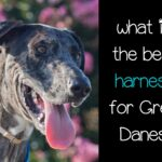 What is the best harness for Great Danes?