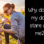 Why does my dog stare at me? Top 6 most common reasons.