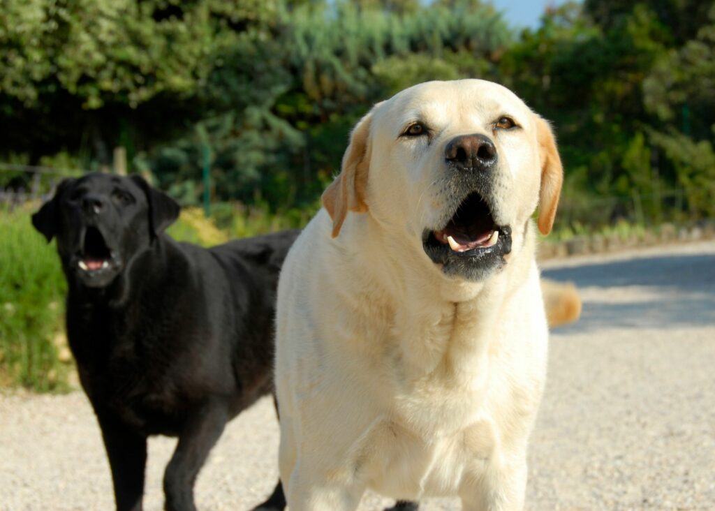 Why does my dog bark at other dogs?