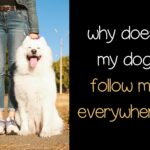 Why does my dog follow me everywhere?