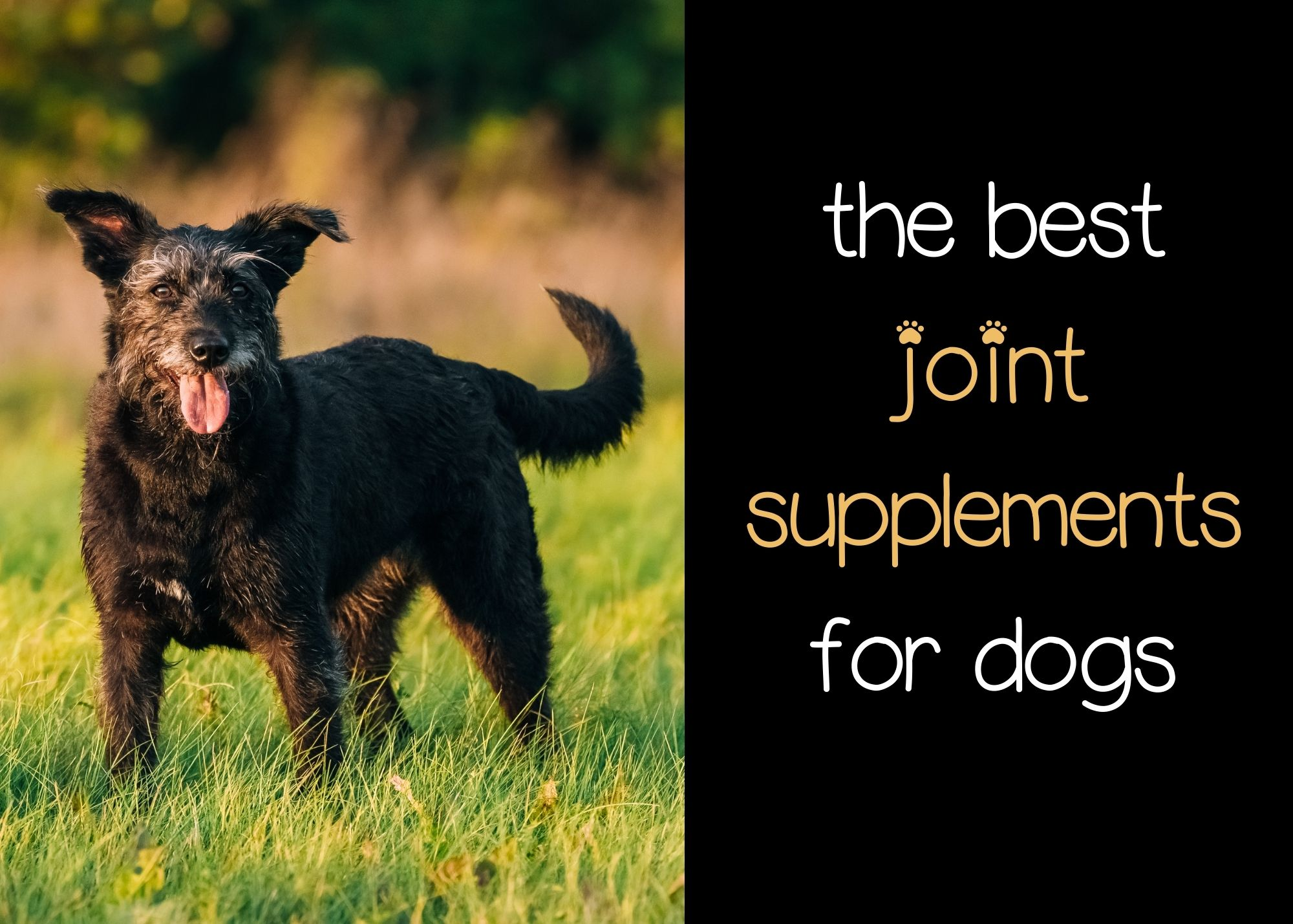 the best joint supplements for dogs