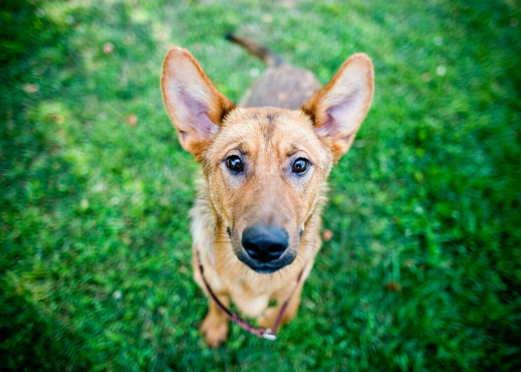 the best ear cleaner for dogs