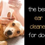 What is the Best Ear Cleaner for Dogs? Our Top 5 Picks.