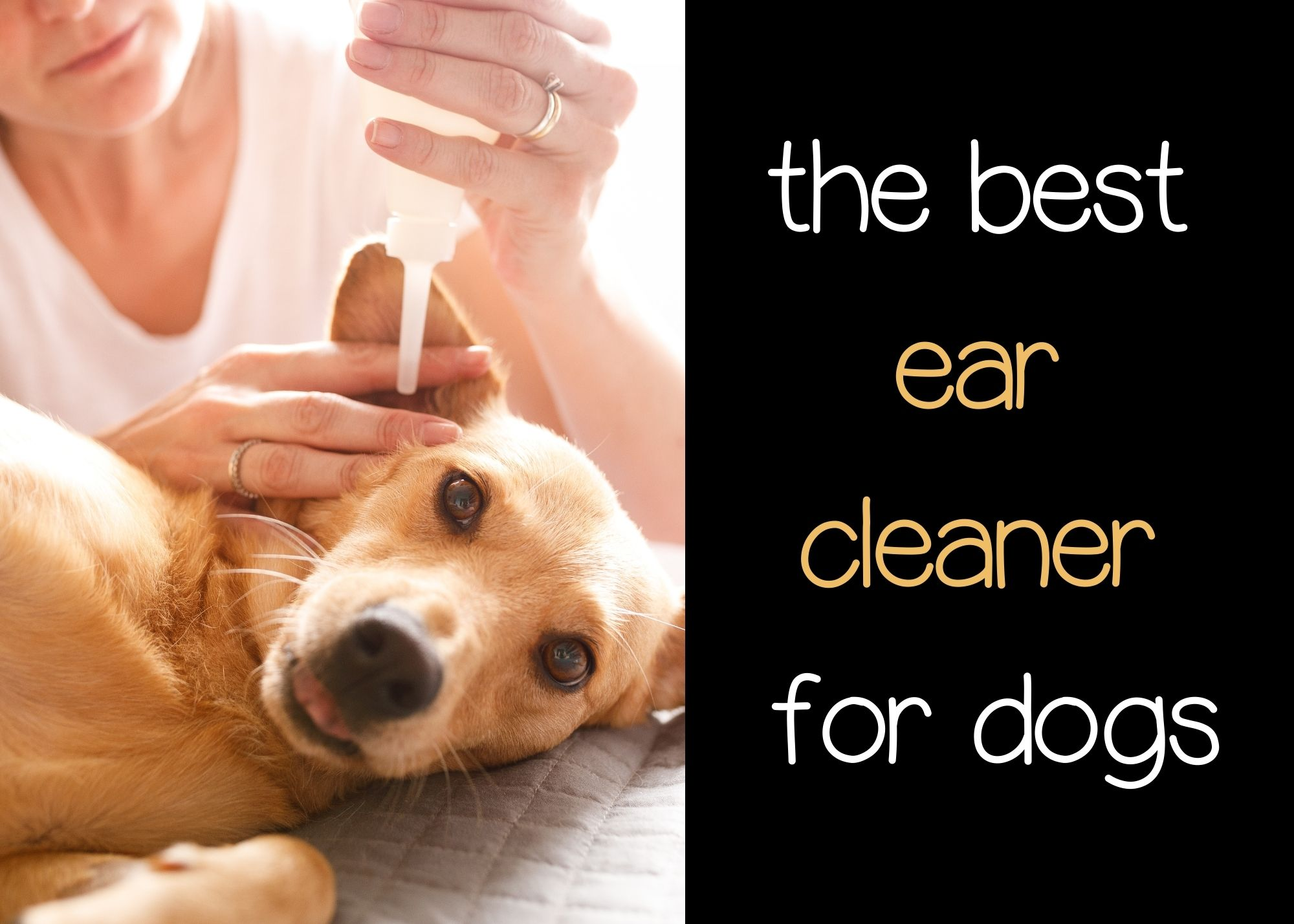 what is the best ear cleaner for dogs?