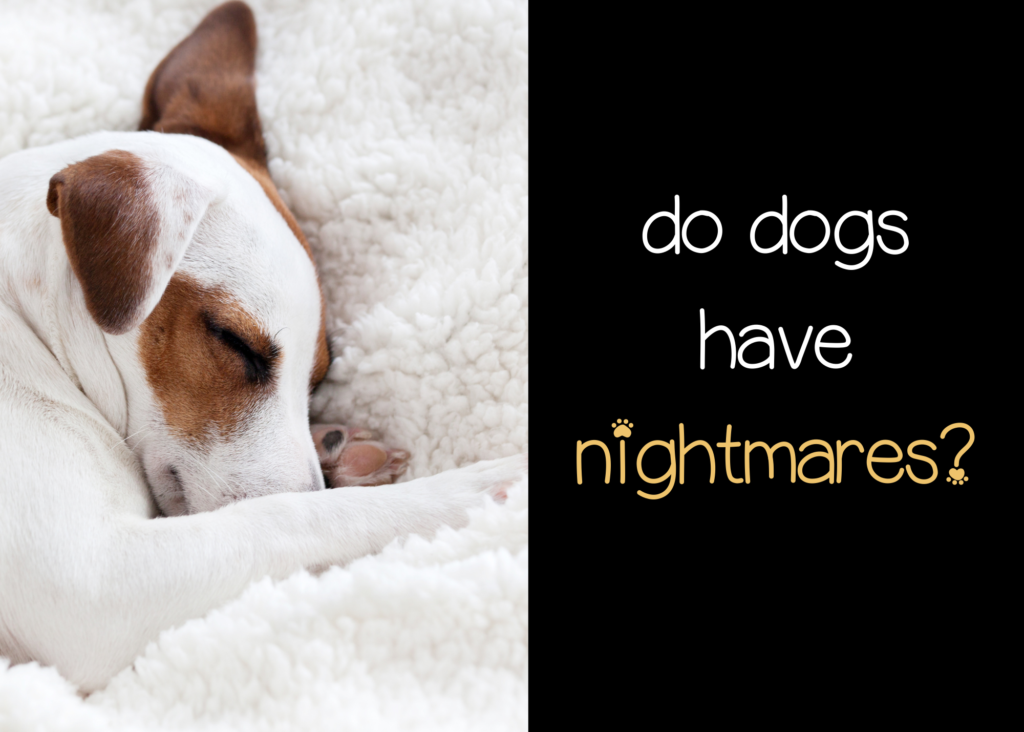 do dogs have nightmares?