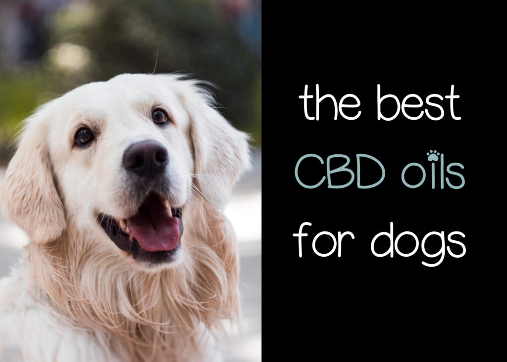 the best cbd oil for dogs