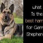 What is the Best Harness for German Shepherds?