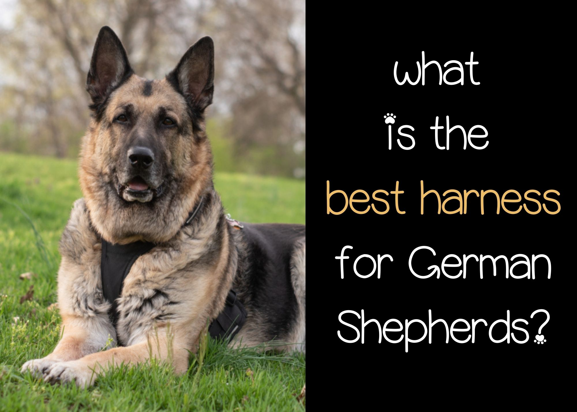 what is the best harness for German Shepherds