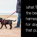 What is the best harness for dogs that pull?