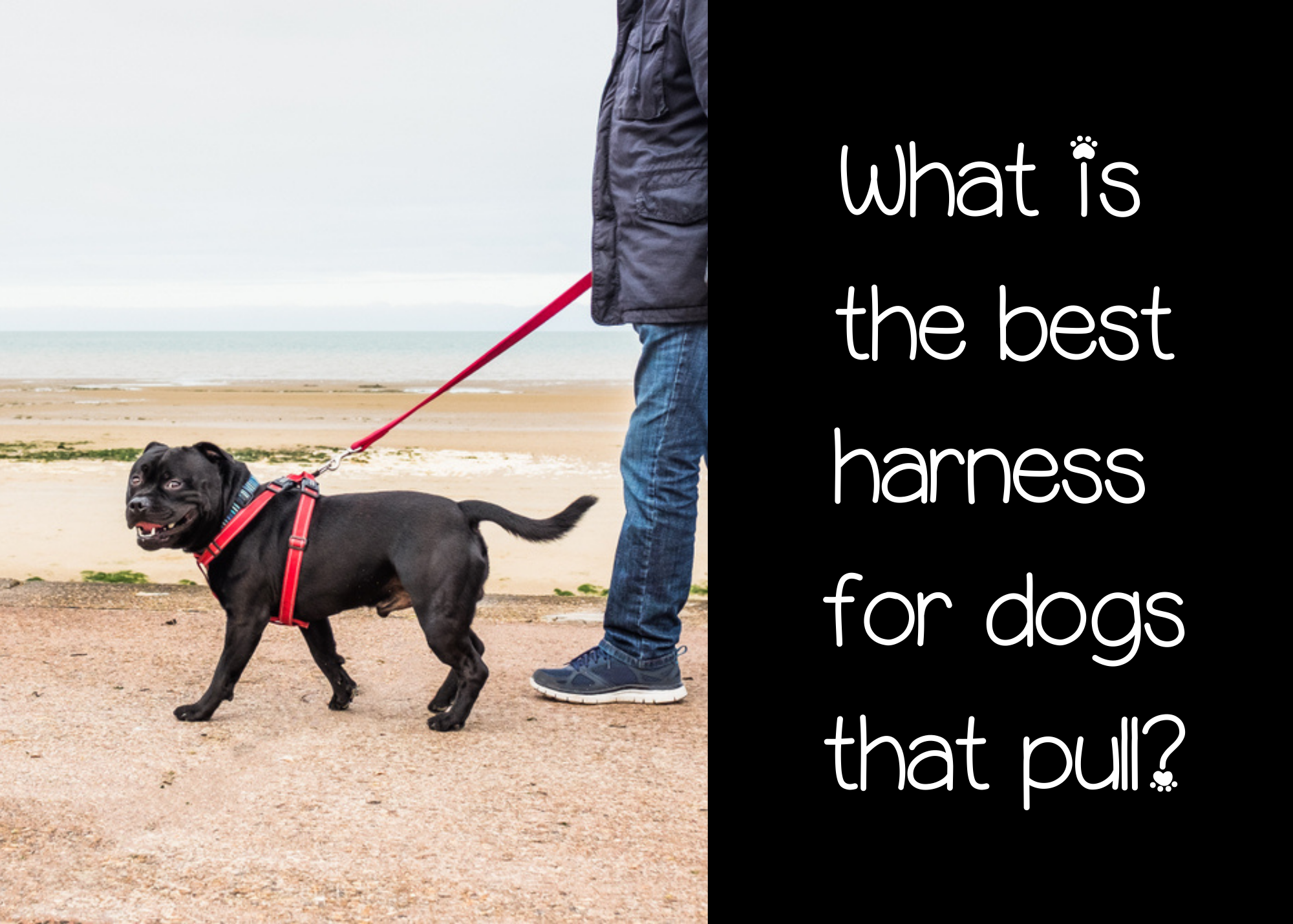 the best harness for dogs that pull