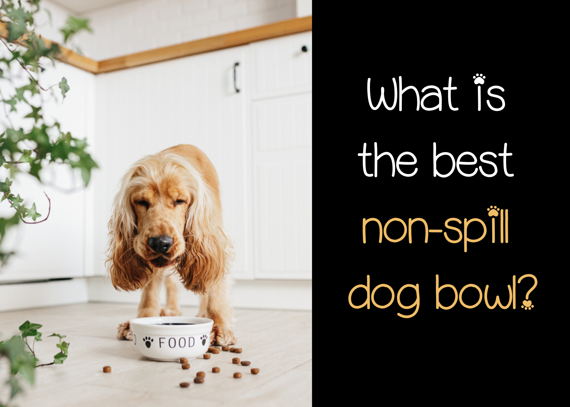 the best non spill dog bowls