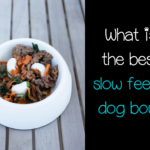 Top 10 slow feeder dog bowls (that your dog will love!)